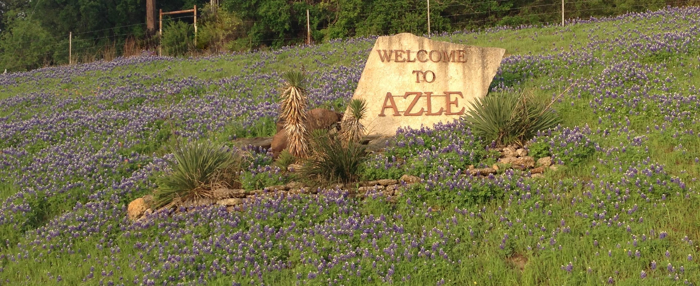 Azle Sign Bluebonnets
